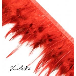 Перья петуха/ Красный