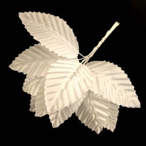 Листья белые