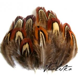 Перья фазана. Цвет: Натуральный